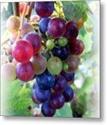 Multicolor Grapes Metal Print