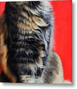 Multicolored Cat In Red Background  Metal Print