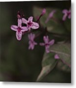 Multiples In Bloom Metal Print