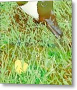 Munching On Green Grass Metal Print