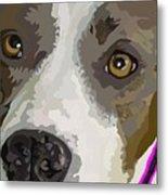 Murphy -- The Closeup Metal Print