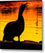 Muscovy Sunset Metal Print