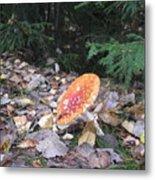 Mushroom A Fly Agaric Metal Print