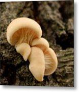 Mushroom Cluster Metal Print