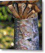 Mushroom Growing From A Birch Tree Metal Print