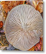 Mushroom On Fall Floor Metal Print