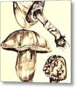 Mushroom Study 4 Metal Print