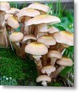 Mushrooms And Moss Metal Print