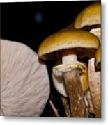 Mushrooms At Sundown Metal Print