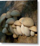 Mushrooms Growing Out Of Dead Tree Metal Print