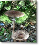 Mushrooms Hdr Metal Print