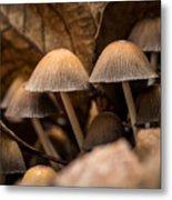 Mushrooms Hidden Between The Leaves Metal Print