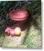 Mushrooms In Spotlight  Metal Print
