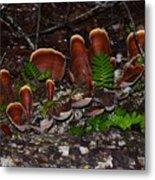 Mushrooms,log And Ferns Metal Print