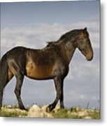 Mustang And Clouds 1 Metal Print by Roger Snyder