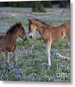 Mustang Foals Metal Print