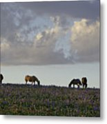 Mustang Group 17 Metal Print by Roger Snyder