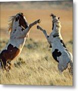 Mustang Rivalry Metal Print