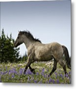 Mustang Running 2 Metal Print by Roger Snyder