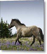 Mustang Running 2 Metal Print