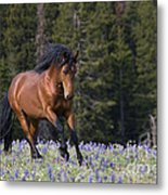 Mustang Stallion And Lupines Metal Print