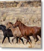 Mustang Trio Metal Print by Mike  Dawson