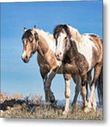 Mustang Twin Stallions Metal Print