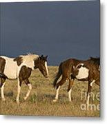 Mustangs In Nevada Metal Print