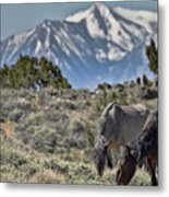 Mustangs In The Sierra Nevada Mountains Metal Print