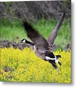 Mustard Flight Metal Print