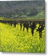 Mustard Flowers Metal Print