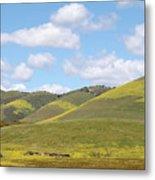 Mustard On Nipomo Hills Metal Print