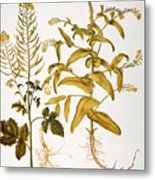 Mustard Plant, 1613 Metal Print