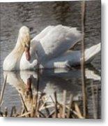 Mute Swan - 3 Metal Print