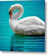 Mute Swan 4 Metal Print