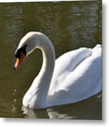 Mute Swan On Rolleston Pond Metal Print