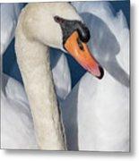 Mute Swan Portrait Metal Print