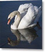 Mute Swan Reflected Metal Print