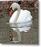 Mute Swan Reflecting Metal Print