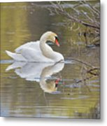 Mute Swan Reflection I Metal Print