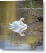 Mute Swan Reflection Metal Print