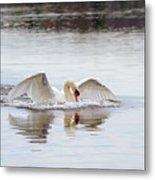 Mute Swan Swim Metal Print