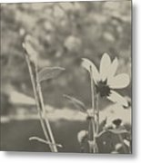 Muted Beauty 1 Metal Print