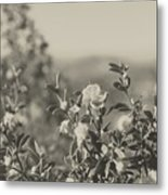 Muted Beauty 2 Metal Print