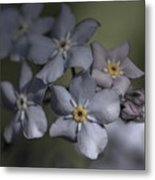 Muted Forget Me Not  Metal Print