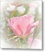 Muted Rose  Metal Print