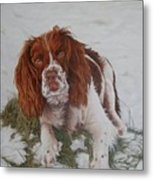 Muttley-the Best Springer Spaniel Metal Print