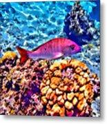Mutton Reef Metal Print