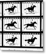 Muybridge: Horse Metal Print