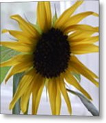 My Beautiful Sunflower Metal Print